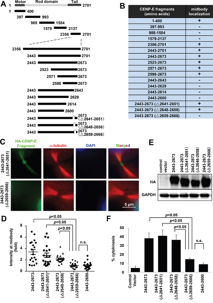 Mapping and characterization of the midbody localization domains of CENP-E.