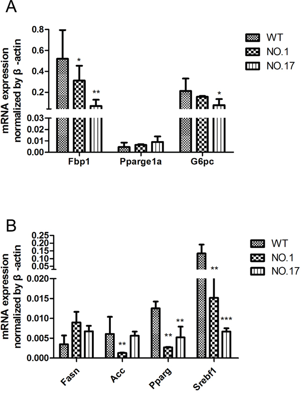 Metabolism genes influence by the heterozygous MPC1 gene KO in the liver.
