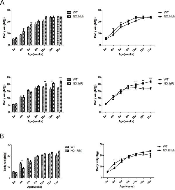 Effect of different heterozygous MPC1 KO on bodyweight.