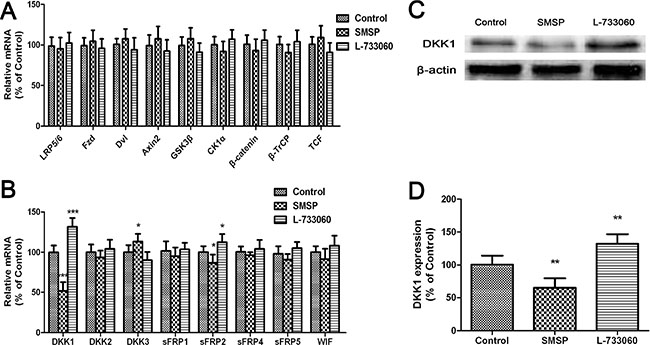 The effects of NK-1R activation (using SMSP) and inhibition (using L-733060) on Wnt inhibitor expression.