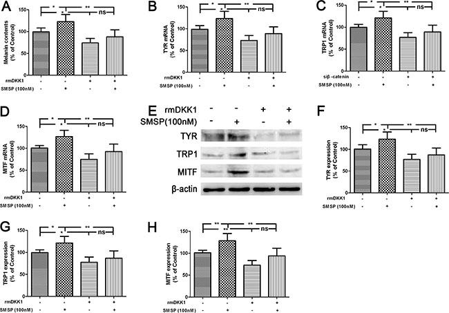 Promotion of melanogenesis by SMSP through the down-regulation of DKK1 in the human melanocytes.
