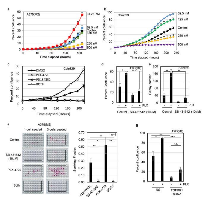 Low dose BRAF inhibitor (PLX-4720) enhances proliferation of drug naïve melanoma cells.