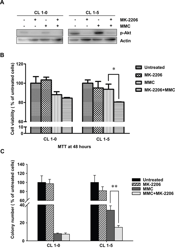 The cell proliferation rates of CL1-0 and CL1-5 cells without p-Akt after MMC treatment.