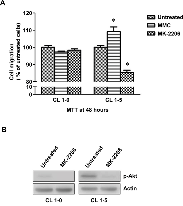 The migration of CL1-0 and CL1-5 cells without p-Akt after MMC treatment.