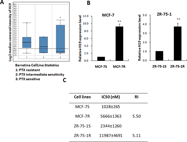 LncRNA H19 was positively correlated with PTX resistance.