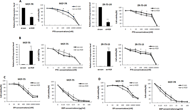 LncRNA H19 contributed to multidrug resistance in breast cancer cells.