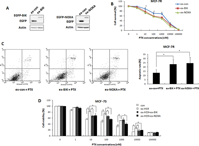 Both BIK and NOXA were involved in H19-mediated drug resistance pathway.