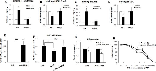 H19 epigenetically silenced BIK in an EZH2 dependent manner.