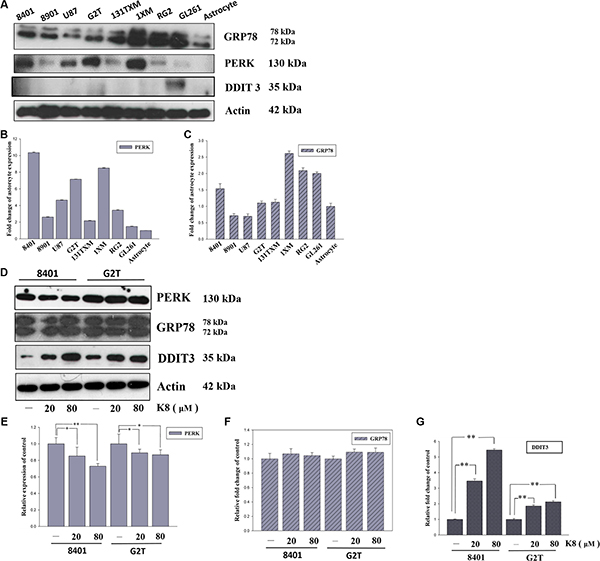K8 induced DDIT3 expression in glioblastoma cell lines.