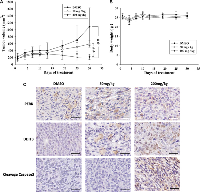 Antitumor effects of K8 in the nude mice xenograft model.