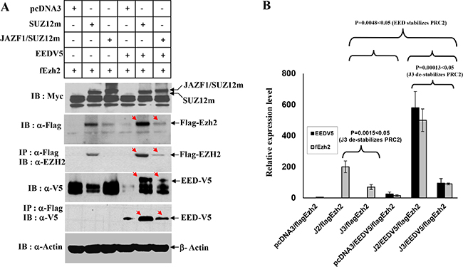 Interactions of JAZF1-SUZ12 protein with EZH2 and EED using co-expression and co-immunoprecipitation.