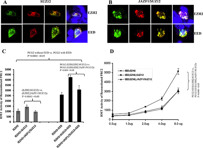 Fusion of JAZF1 with SUZ12 decreases co-localization with EZH2 and EED, and lowers the HMT activity of PRC2.