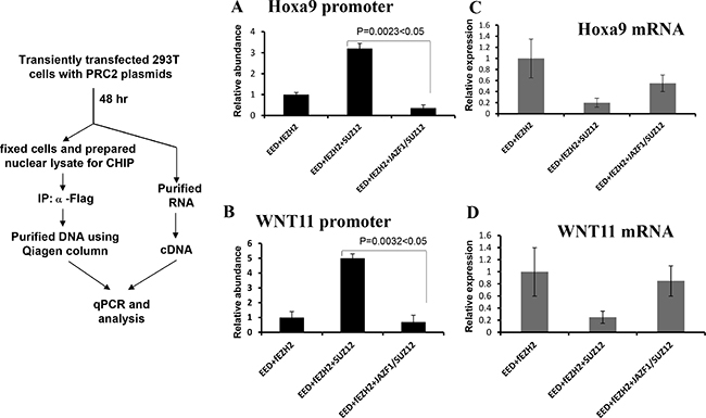 Fusion protein JAZF-SUZ12 reduces the binding activity of PRC2 with target promoters and enhances its expression.
