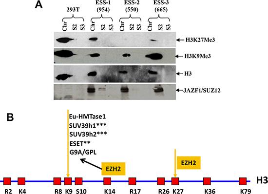 t(7;17) and JAZF1-SUZ12 expression in human ESS dramatically decreases H3K27 trimethylation.