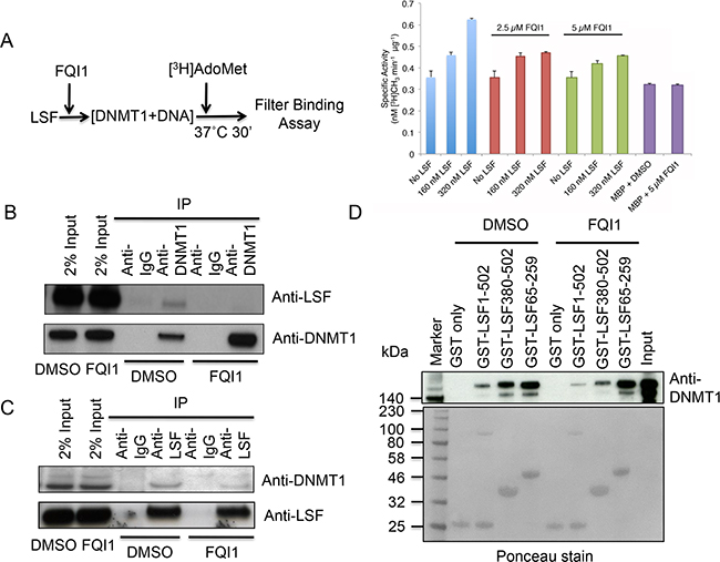 LSF stimulates DNMT1 and FQI1 negates methyltransferase activation.