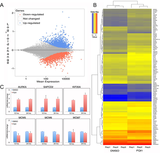 Transcriptome analysis of FQI1- versus vehicle-treated HEK293T cells.