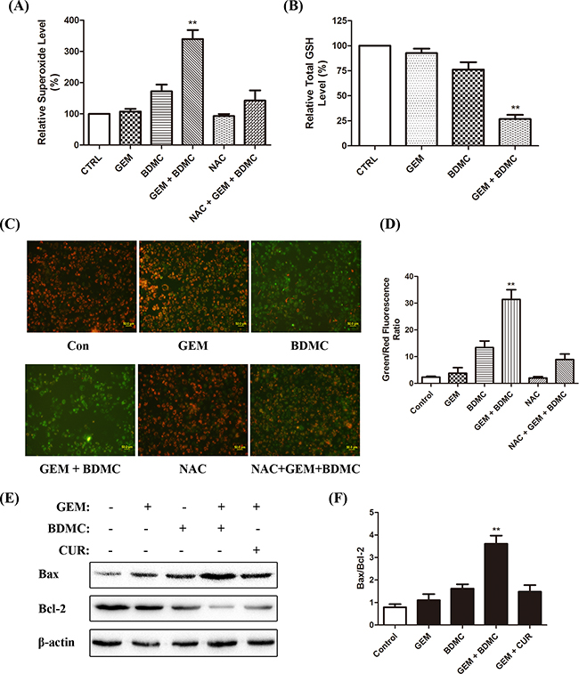 BDMC induces apoptosis through mitochondrial dysfunctions.