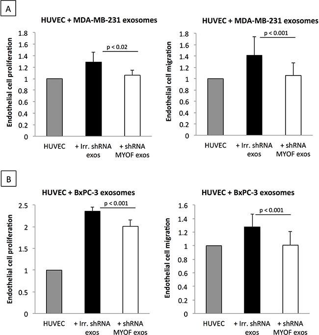 Myoferlin-depleted cancer-derived exosomes decrease proliferation and migration of endothelial cells.