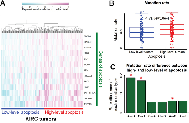 A→G mutation rate associated with apoptosis in renal clear cell carcinoma.