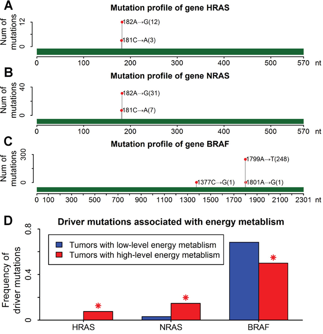 Higher frequency of RAS mutations in thyroid cancers with high-level energy metabolism.