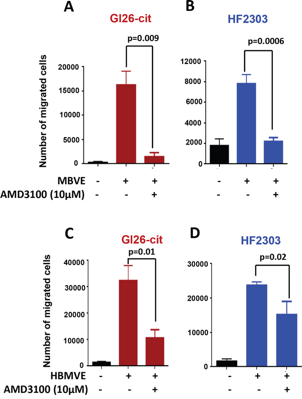 Blocking CXCR4 with AMD3100 inhibits migration of mouse and human glioma cells toward endothelial cells.