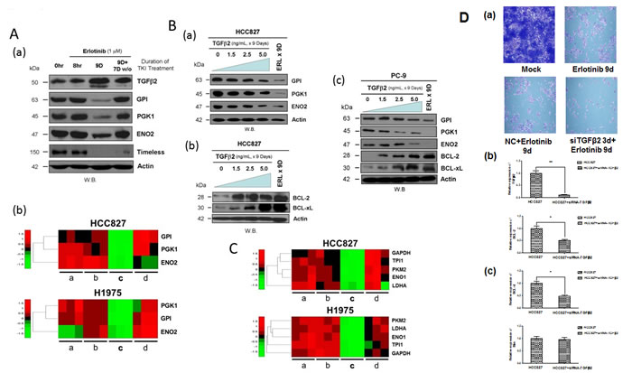Downregulation of glycolytic regulatory enzymes expression through TGFβ2 signaling to promote pro-survival mitochondrial-priming.
