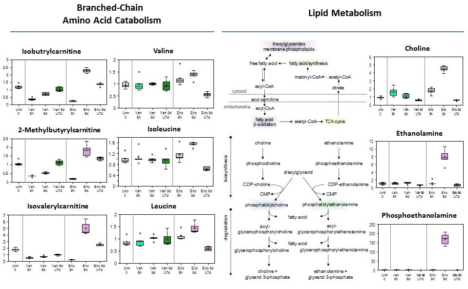 Branched-chain amino acid catabolism, and Lipid metabolism reprogramming in early adaptive drug-resistant HCC827 EGFR-mutant cells under erlotinib inhibition.