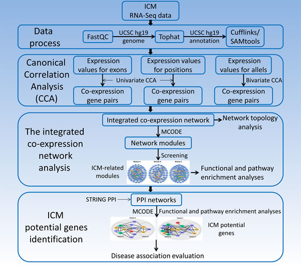 The identification of potential genes for human ischemic cardiomyopathy based on RNA-Seq data.