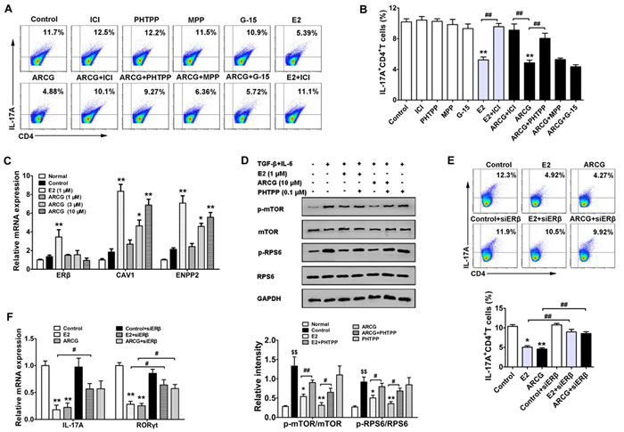Arctigenin inhibits the differentiation of Th17 cells through ERβ.