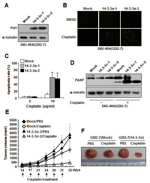 Ectopic expression of 14-3-3σ restores chemosensitivity to cisplatin in RhoGDI2-overexpressing gastric cancer cells.