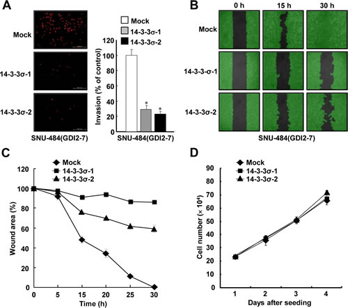 Ectopic expression of 14-3-3σ suppresses RhoGDI2-induced gastric cancer cell migration and invasion.