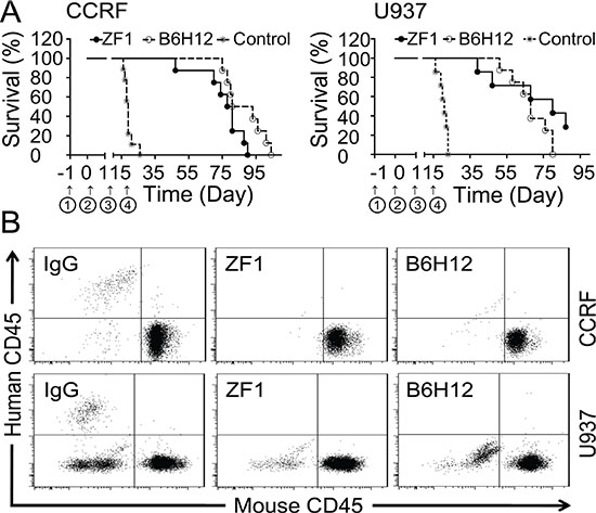 Protection from leukemic death by ZF1 in vivo.