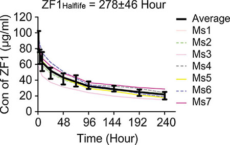Pharmacokinetic analysis of ZF1.