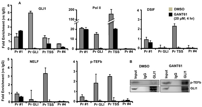 Inhibition of binding of GLI1, Pol II, DSIF, NELF and p-TEFB to the FOXM1 promoter following GANT61 exposure.