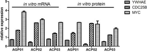 YHWAE, CDC25B and MYC mRNA and protein expression in gastric cancer cell lines in relation to non-neoplastic cells.