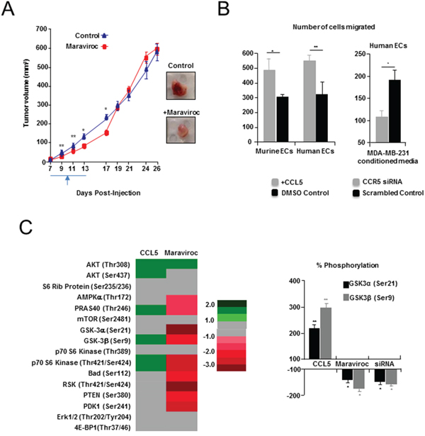 Pharmacologic inhibition of CCL5/CCR5 in a syngeneic model of breast cancer.