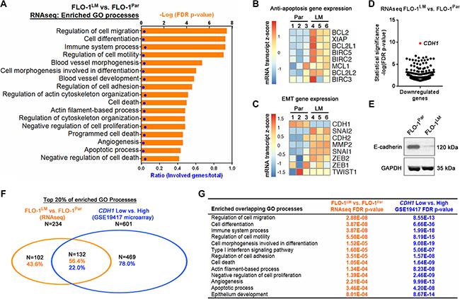 FLO-1LM highlights molecular pathways that are deranged in metastasis.