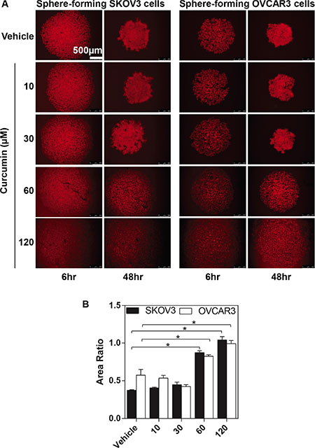 The inhibitory effects of curcumin on SKOV3 and OVCAR3 sphere formation.
