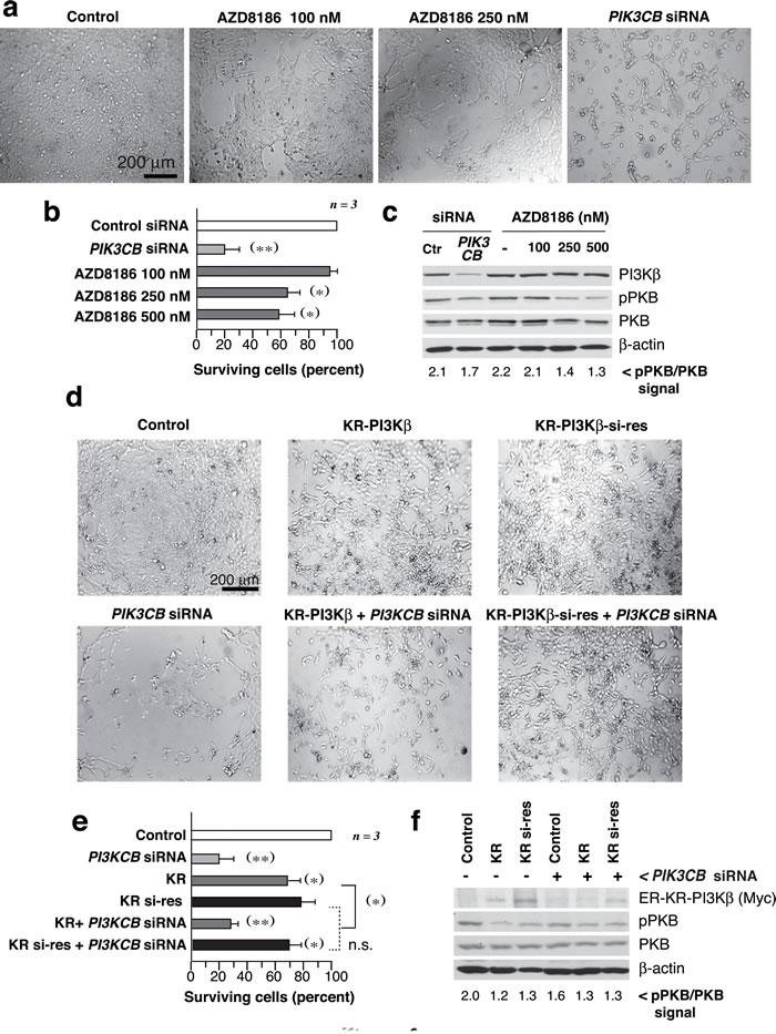 PI3Kβ regulates UBC cell survival in a kinase-independent manner.