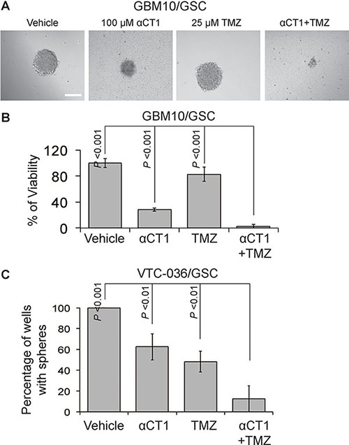 The effect of αCT1 and TMZ in GBM10/GSCs and VTC-036/GSCs.