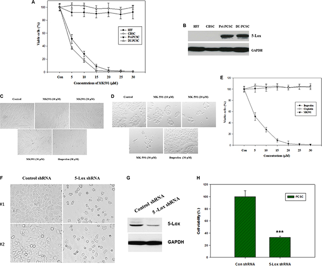 MK591 decreases viability of prostate cancer stem cells, but not of non-cancer cells or normal stem cells.