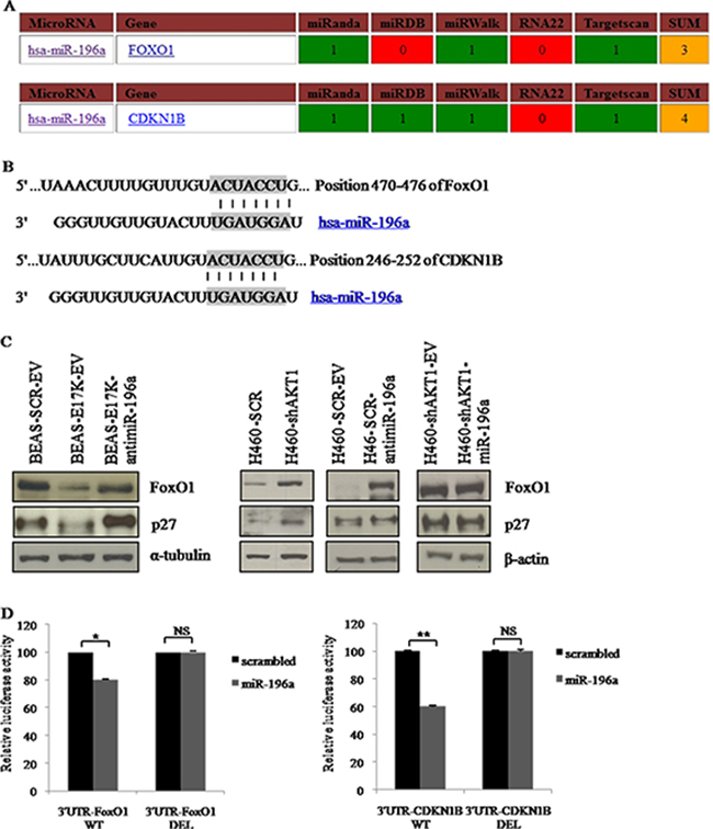 Role of predicted target genes of miR-196a in NSCLC cells.