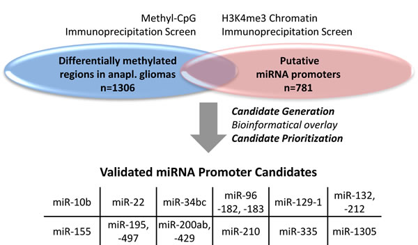 miRNA candidates were generated by the overlay of two data sets.