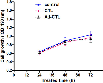 The effect of Ad5/35-TRAIL-CD40L-CTL (Ad-CTL) on normal HFF cell proliferation.