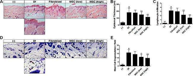 Oncotarget   Human adipose tissue-derived mesenchymal stem cells