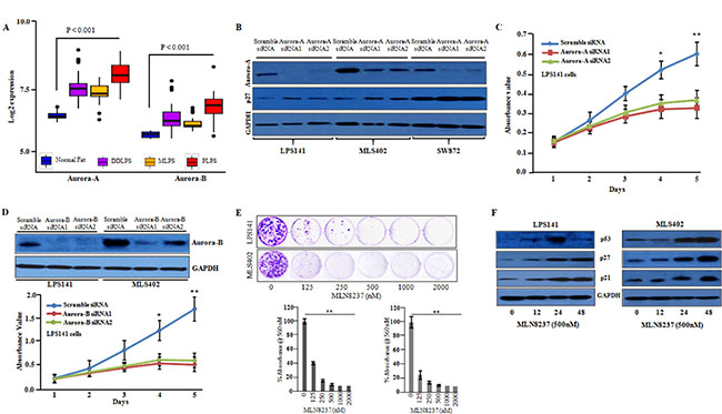 Inhibition of aurora-A and aurora-B decreased the cellular growth of liposarcoma cells.