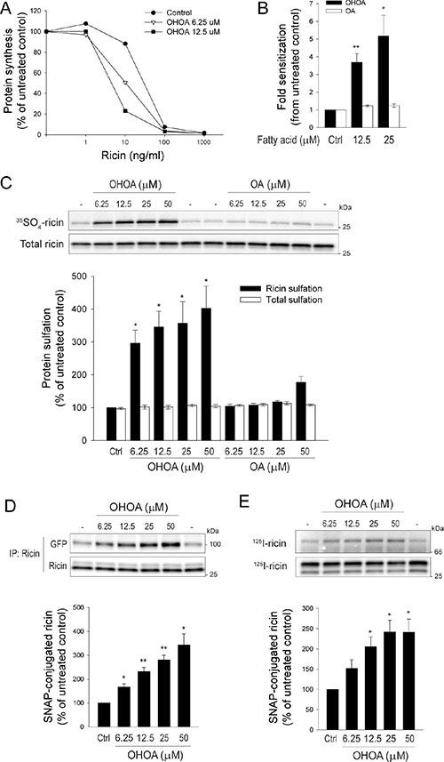 OHOA stimulates ricin toxicity and retrograde transport.