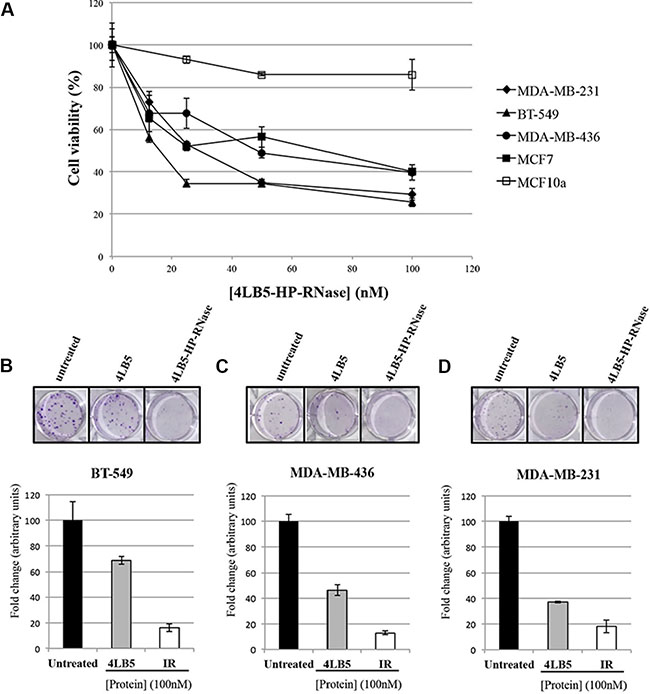In vitro effects of the immunoRNase on cell proliferation.