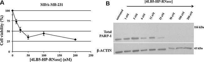 Effects of 4LB5-HP-RNase on cancer cell apoptosis.