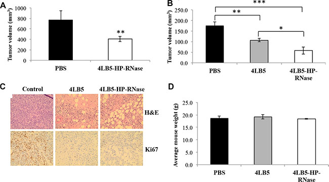 In vivo effects of 4LB5-HP-RNase on NCL-positive tumors induced in mice by using MDA-MB-231 breast cancer cells.